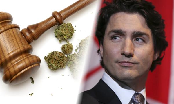 myths-canadians-marijuana-0-08-02