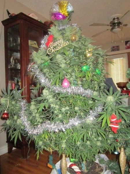weed_tree