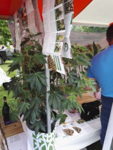 Siemenkaupan myyntikojua koristi kaunis kasvi.