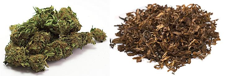 Kannabis Lajikkeet